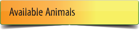 Available Animals